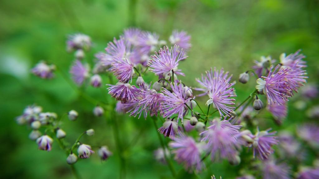 Blumen aus der Saison sind für eine nachhaltige Hochzeit unerlässlich.