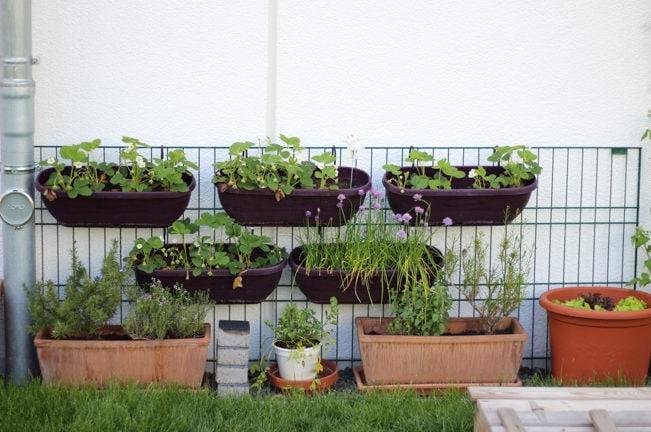 Unser kleiner Gemüsegarten im Frühling