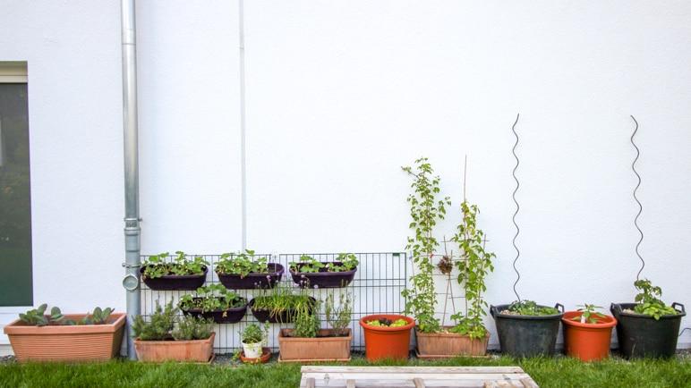 Vielfalt im Frühling im Gemüsegarten